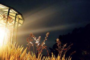 fresnel lamp thumbnail
